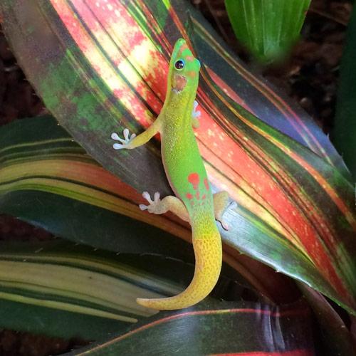 TinaGrube-Reptil